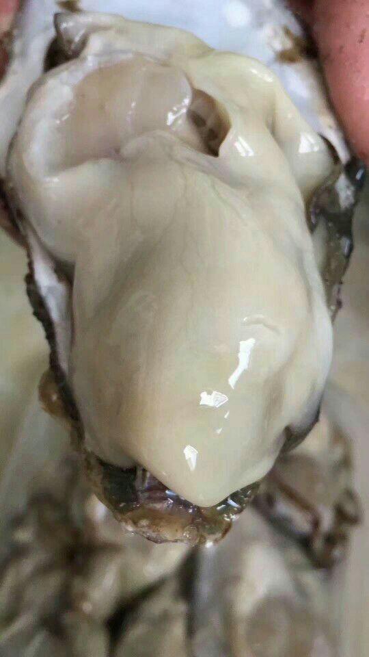 生蠔 海鴨蛋 海參 即食海參各類海產