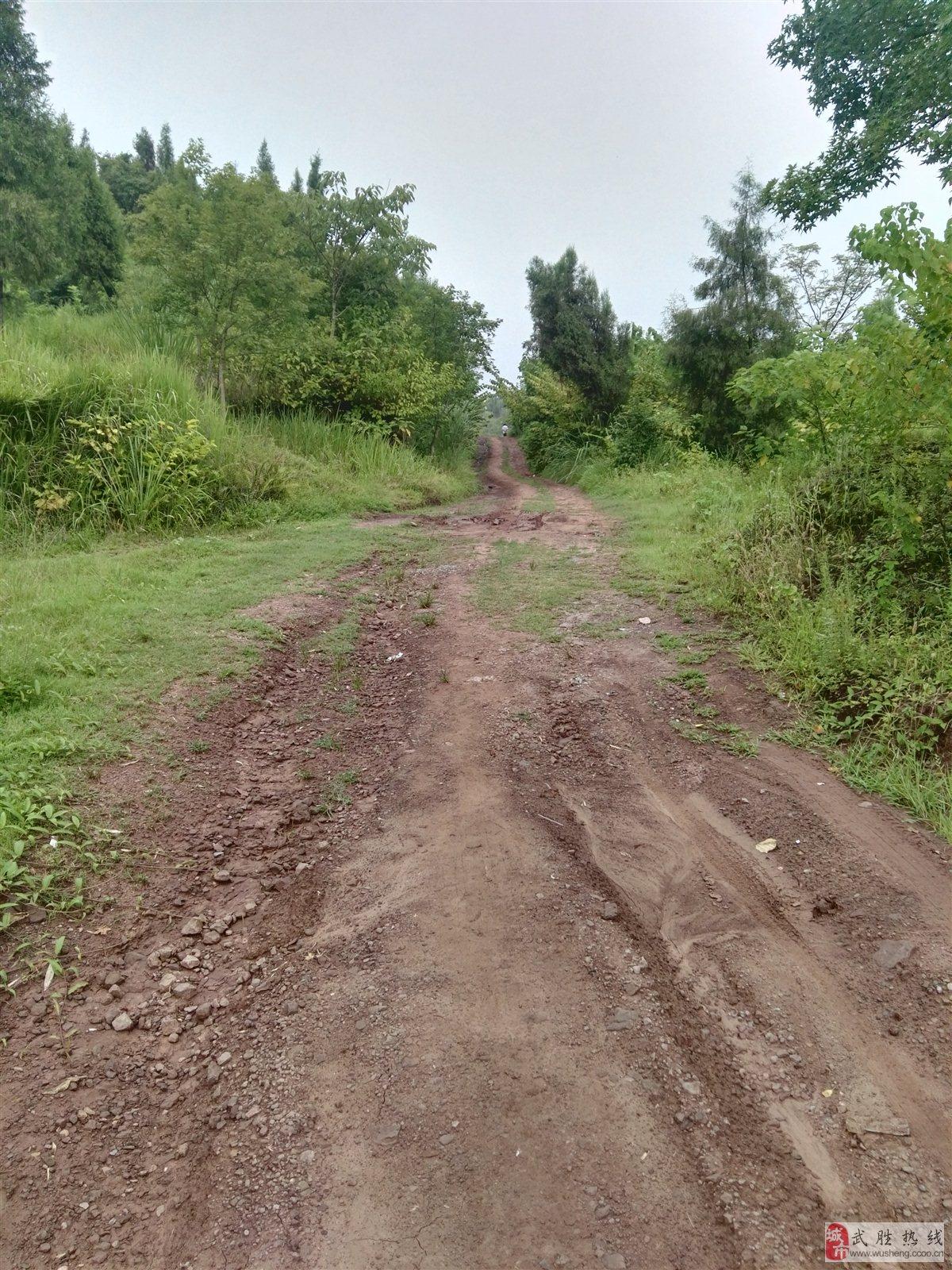 关于乡村公路的建设