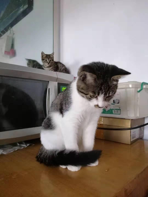 四只三個多月貓貓無償找領養