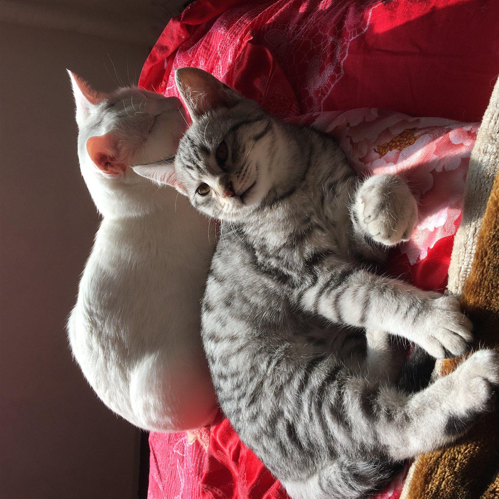 找一個真心愛貓的人