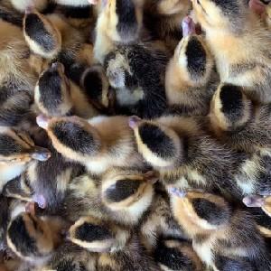 河南胡氏禽业发展有限