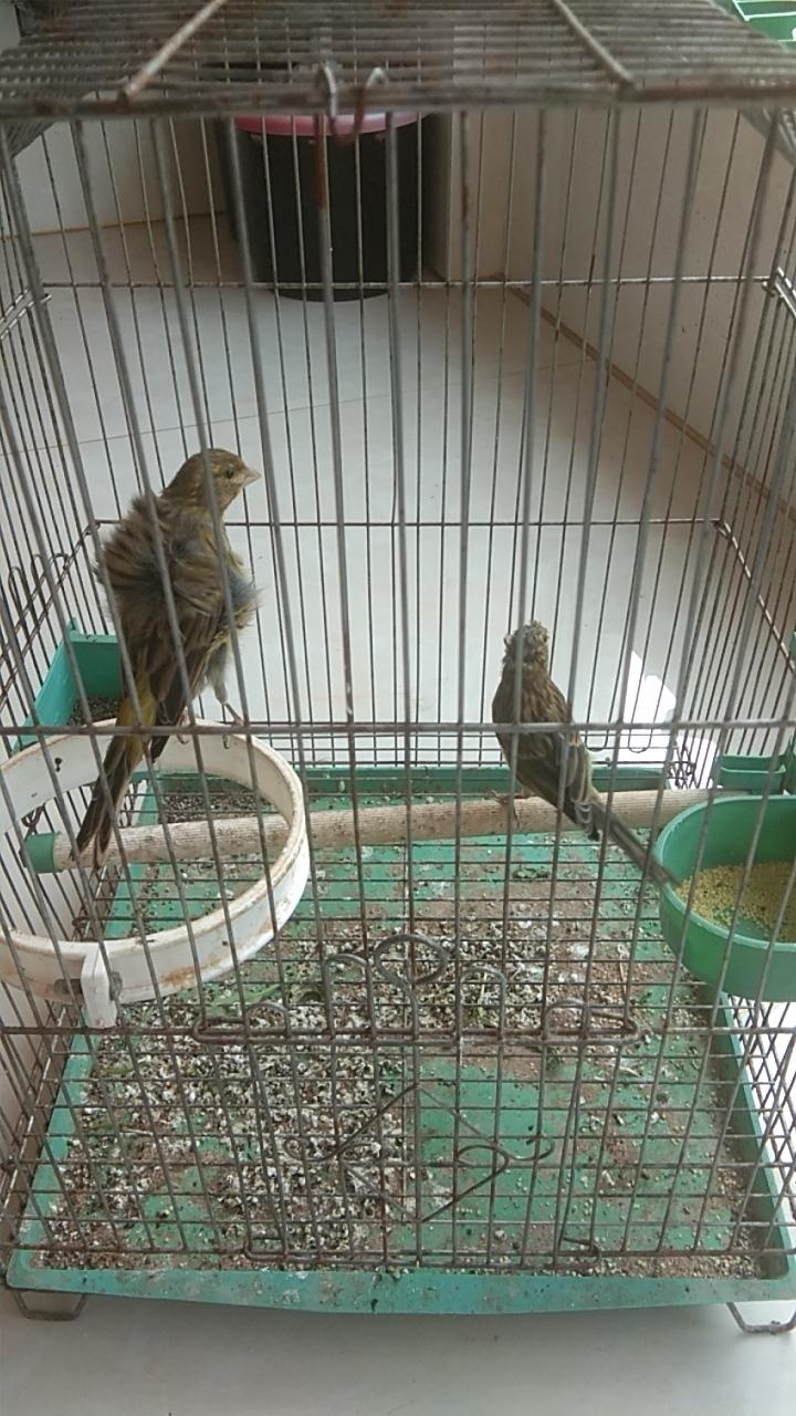 出售各种玉鸟