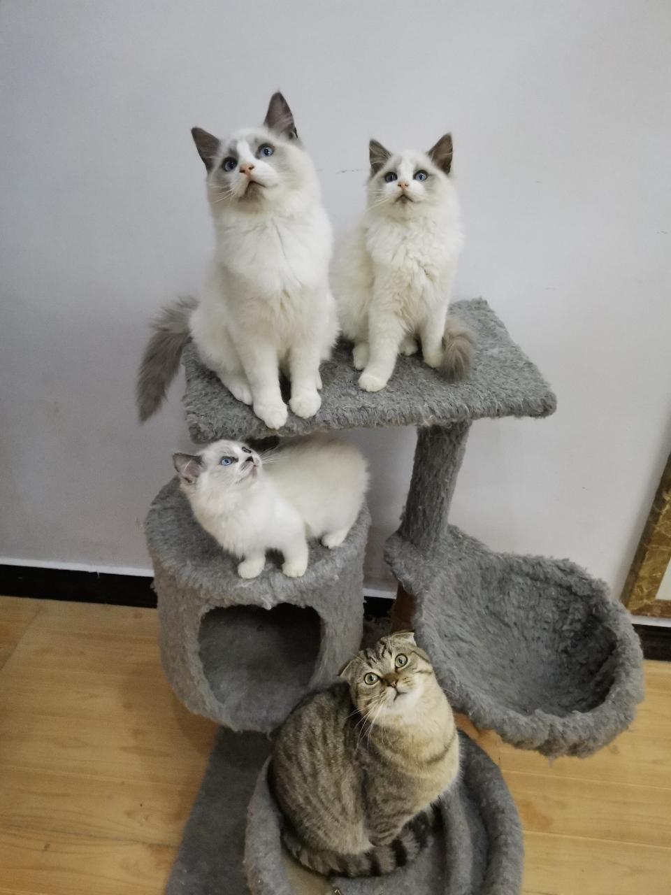 黔江名猫舍
