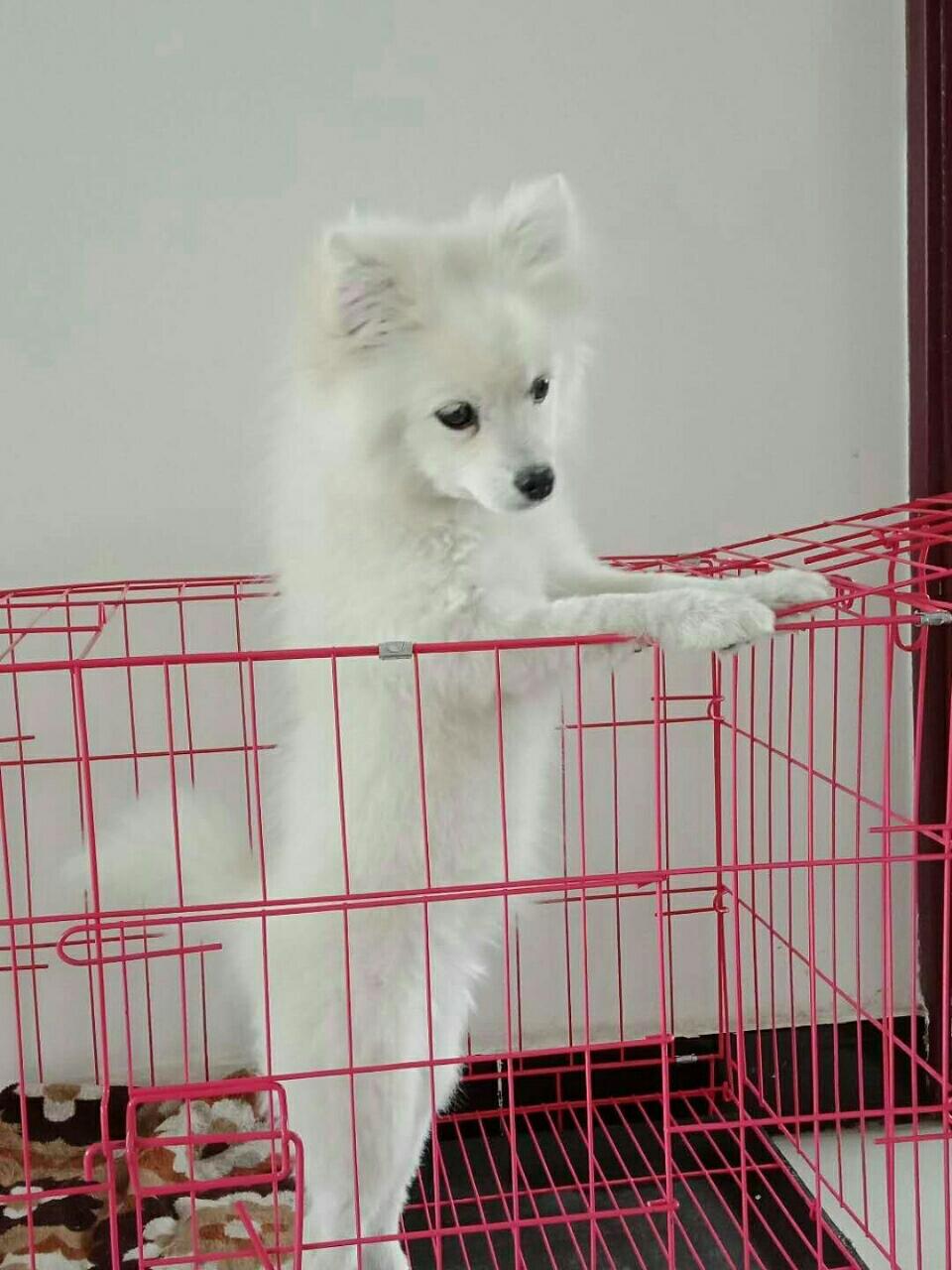 寵物狗轉讓