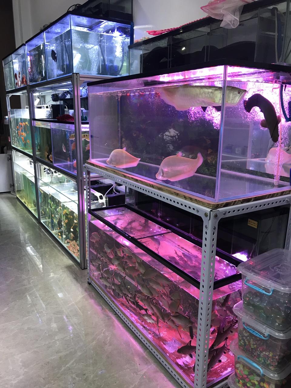 白沙七坊四海漁具水族館