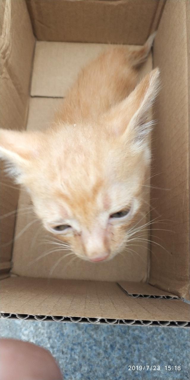 小奶貓出售