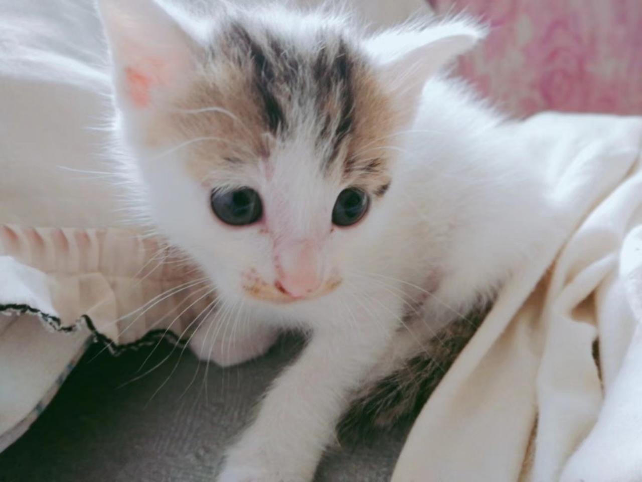 有想养猫猫的么?小奶猫,仅爱猫人士