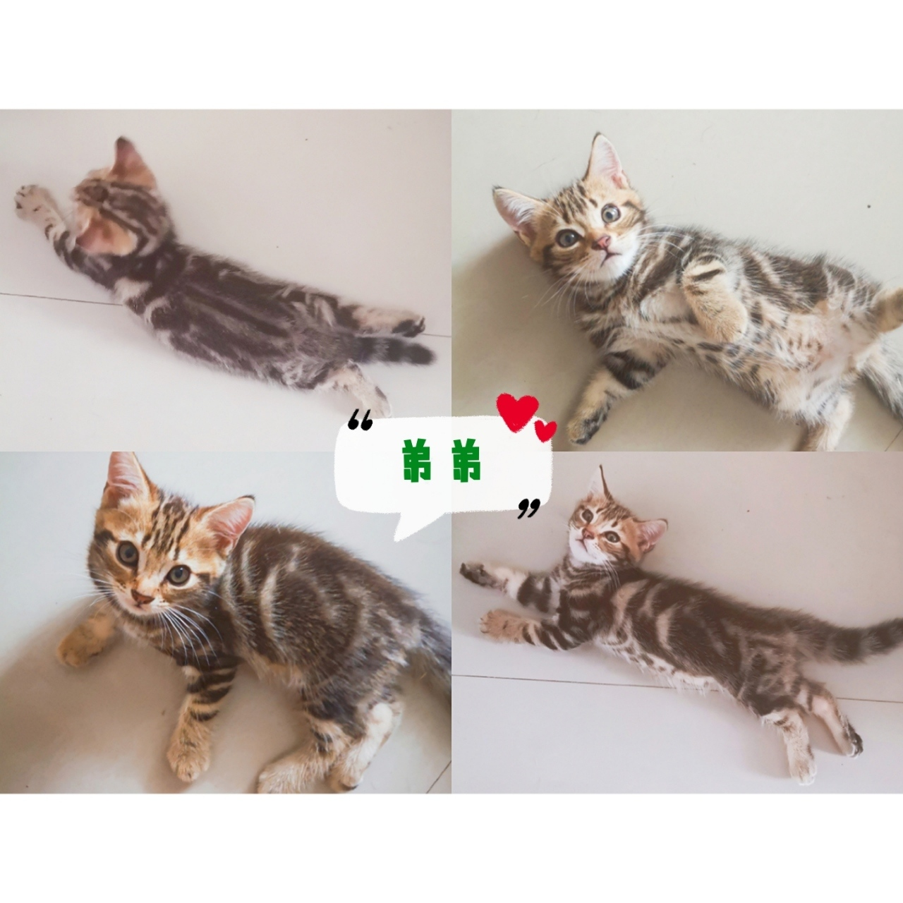 家养猫宝宝找有爱家长