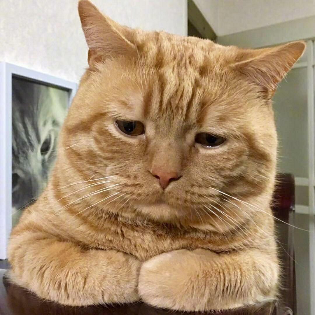 收养猫咪一只
