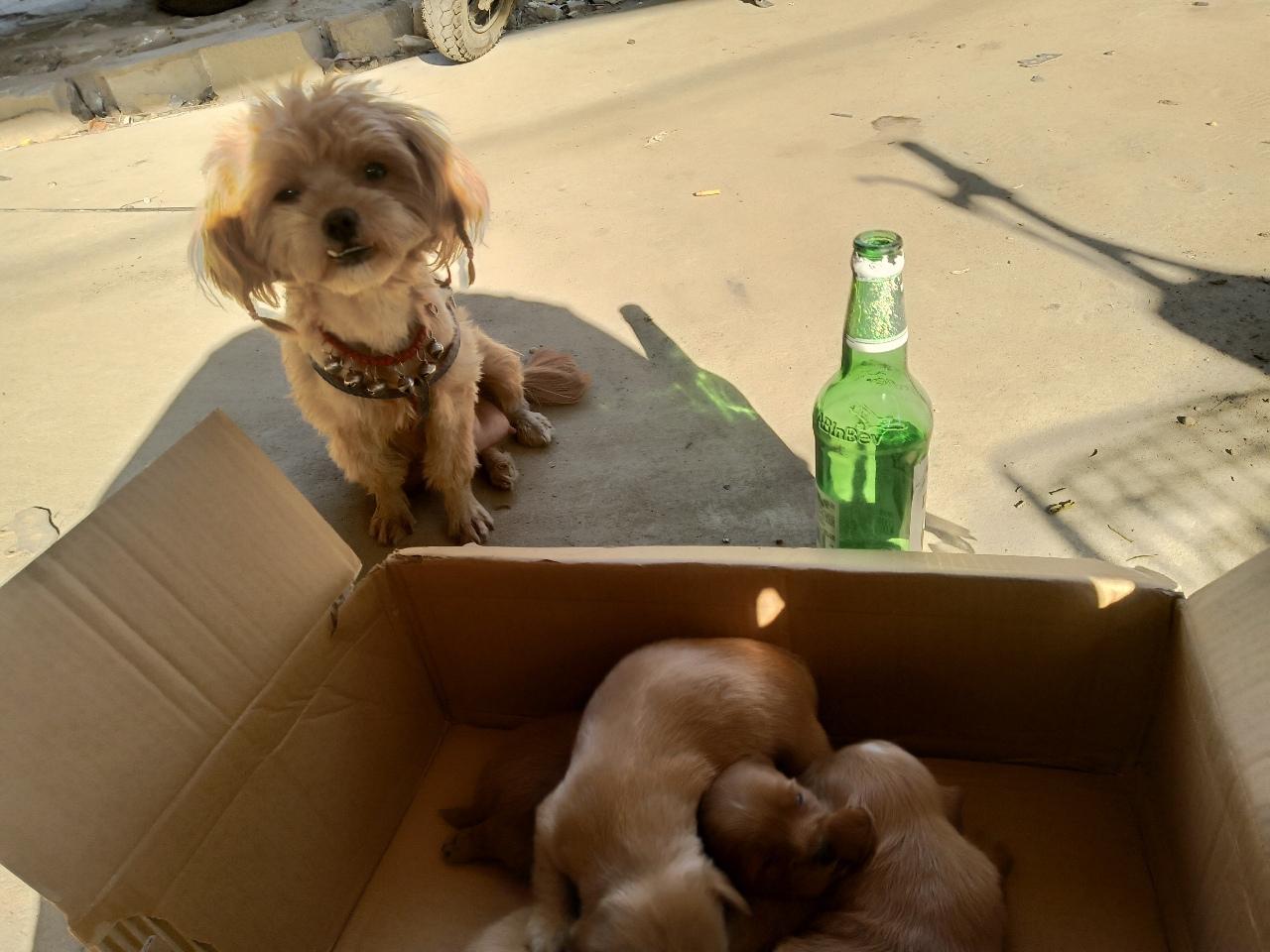 爱狗人士求购。