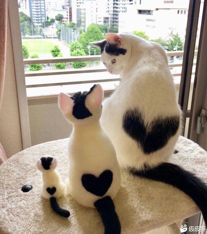 收養寵物貓,