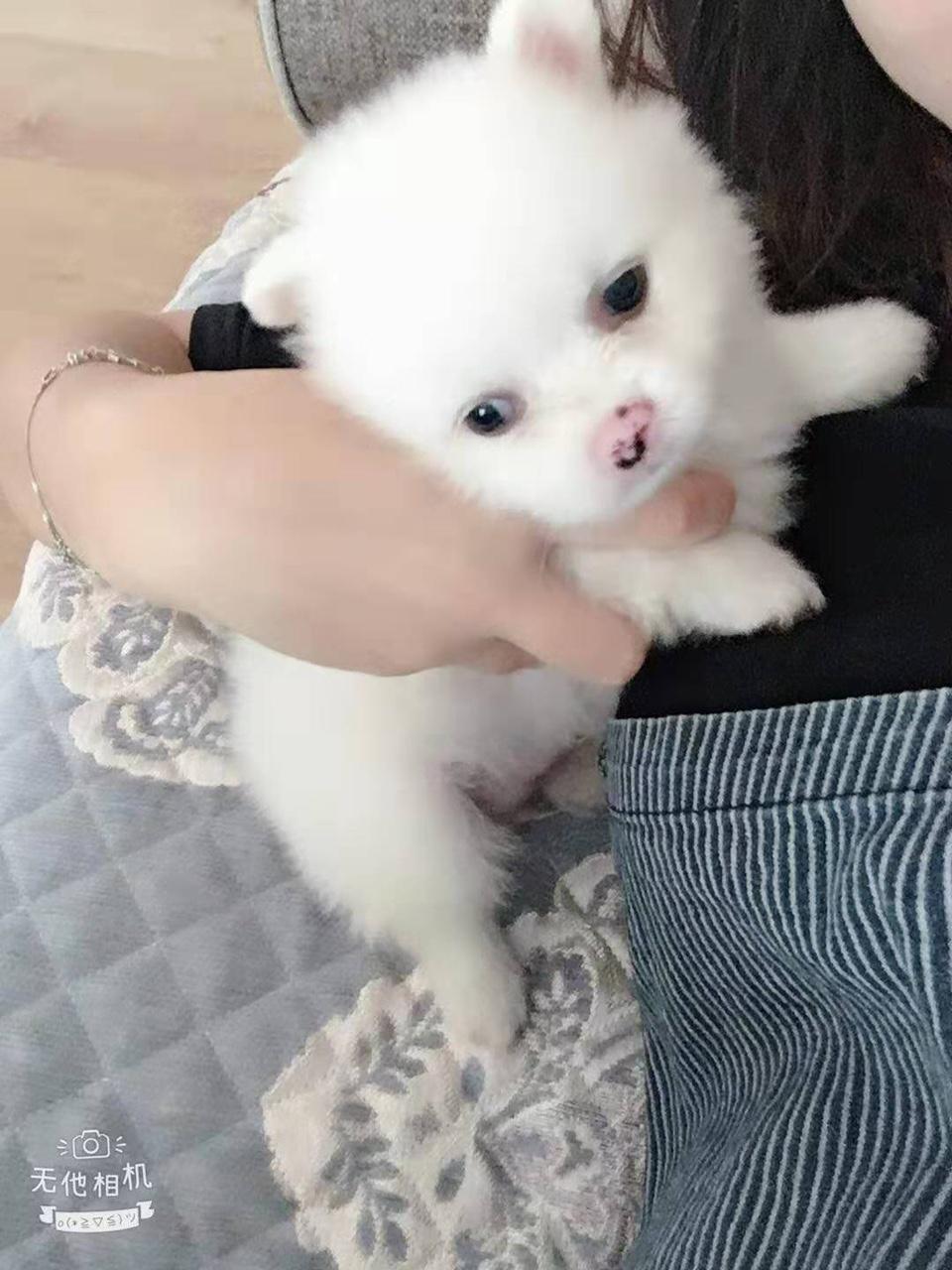 个人宠物狗出售