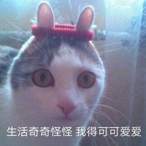 求领养一只小猫咪