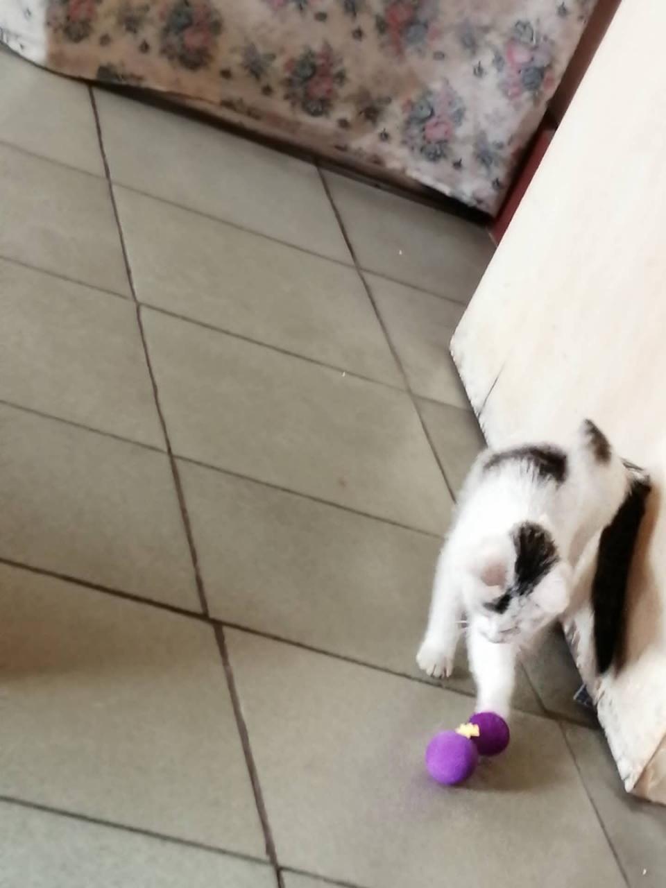 小貓活潑可愛