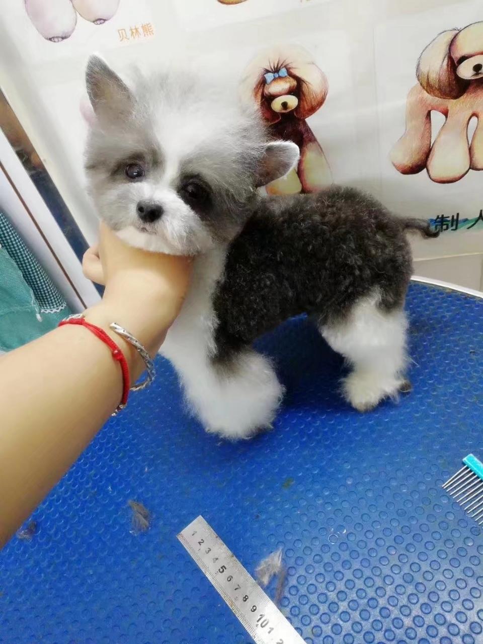 寵物**洗護、美容。幼犬出售