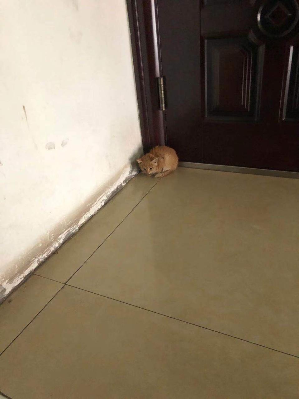 小橘貓免費領養