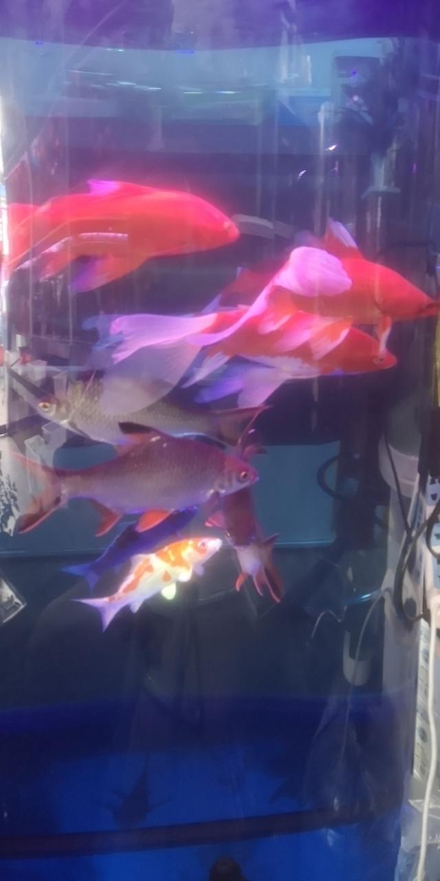 鱼你有缘水族馆