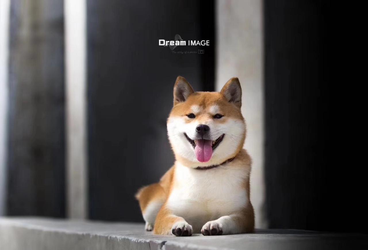 小犬純一郎寵物店。