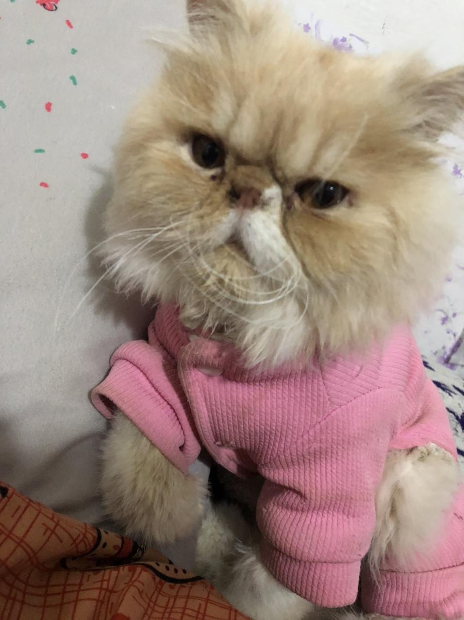 加油一只加菲弟弟,想在領養一只貓咪