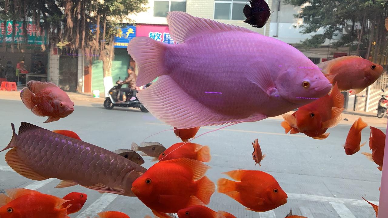 水東市場幸福魚館主營各類魚龜缸
