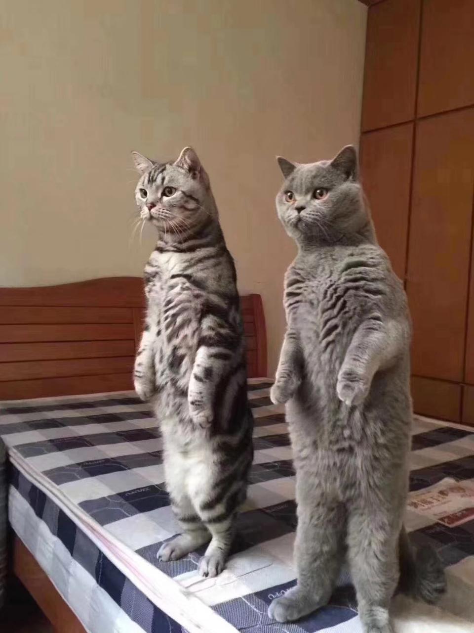 厂家批发狗粮猫粮宠物狗