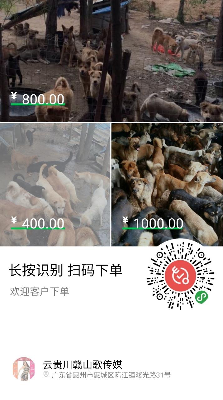 自家土狗养殖场大量出售土狗