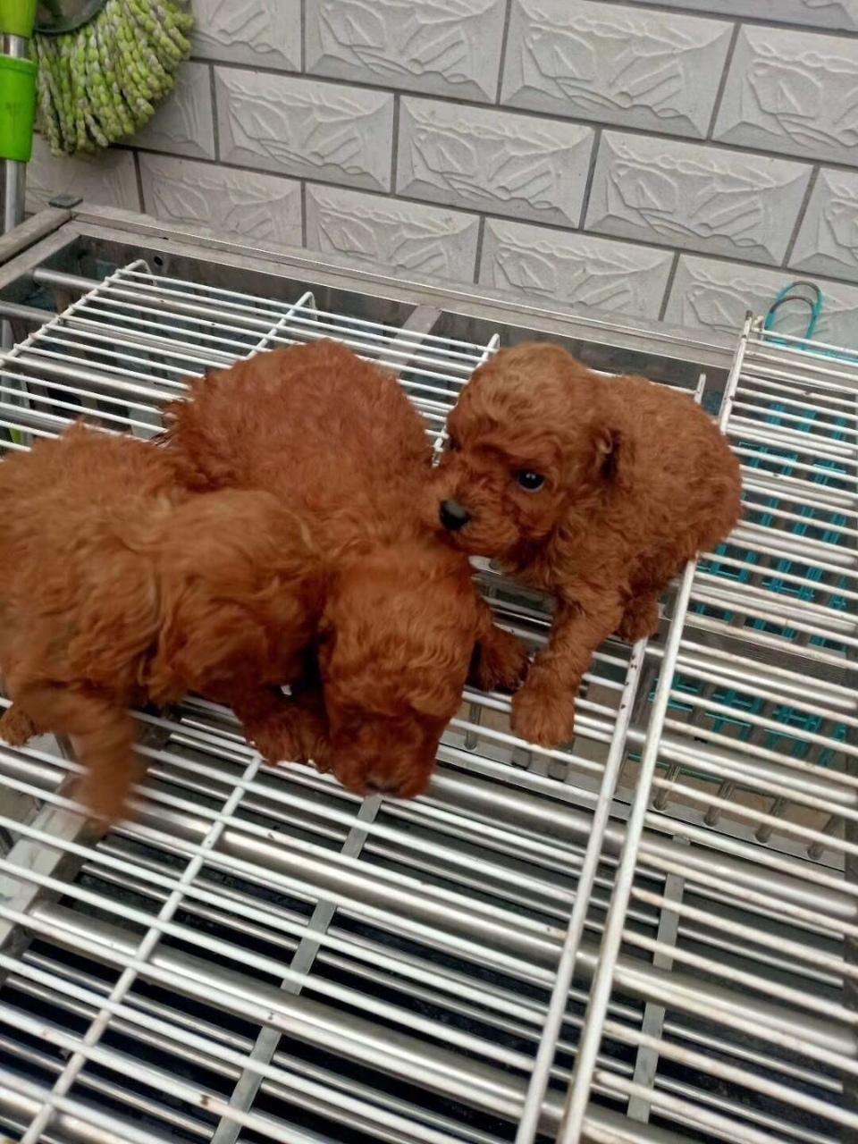 宠物狗幼犬和狗粮