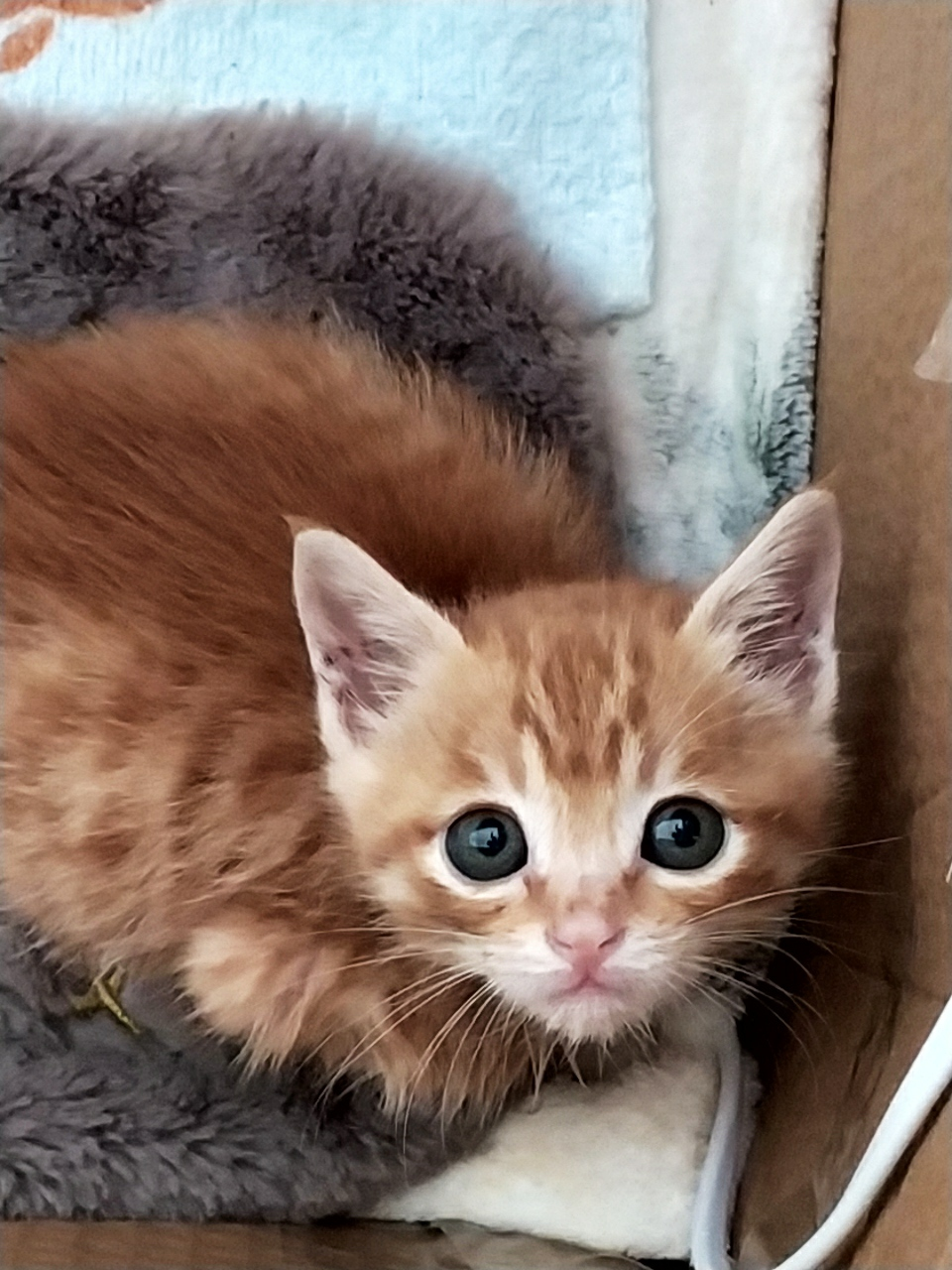給橘貓找個好人家
