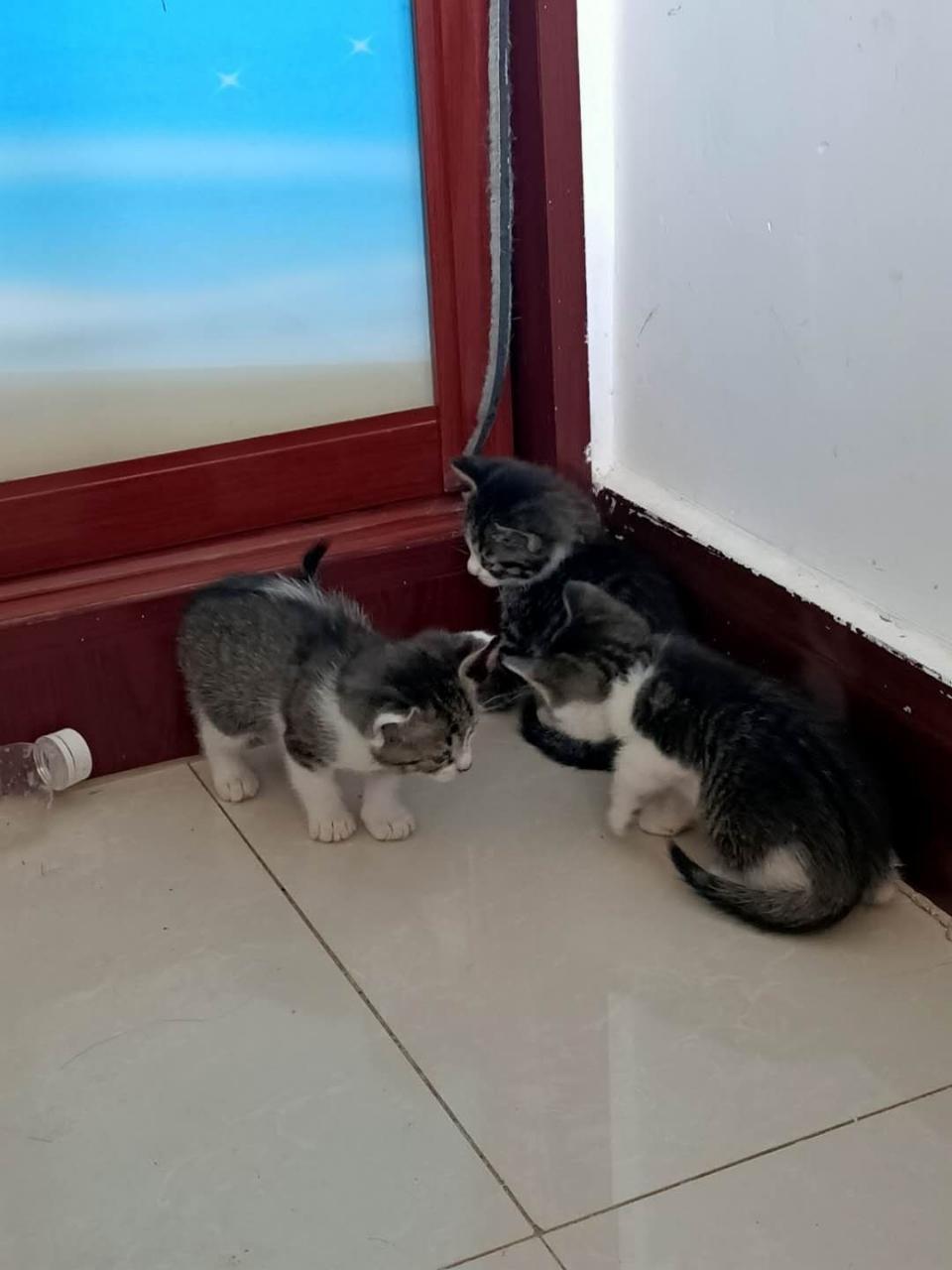 滿月小貓找領養