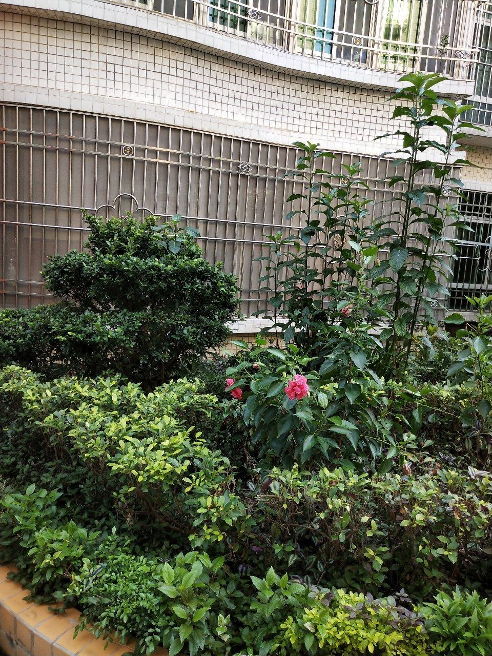 金凤花园4室 2厅 2卫98万元