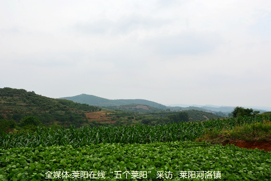 河洛镇北倚莱阳最高峰旌旗山,蜿蜒秀丽的蚬河和旌阳河穿境而过