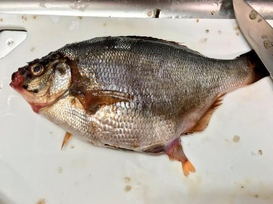 小哥在市场买一条大鱼,剖开肚子竟被当场吓傻