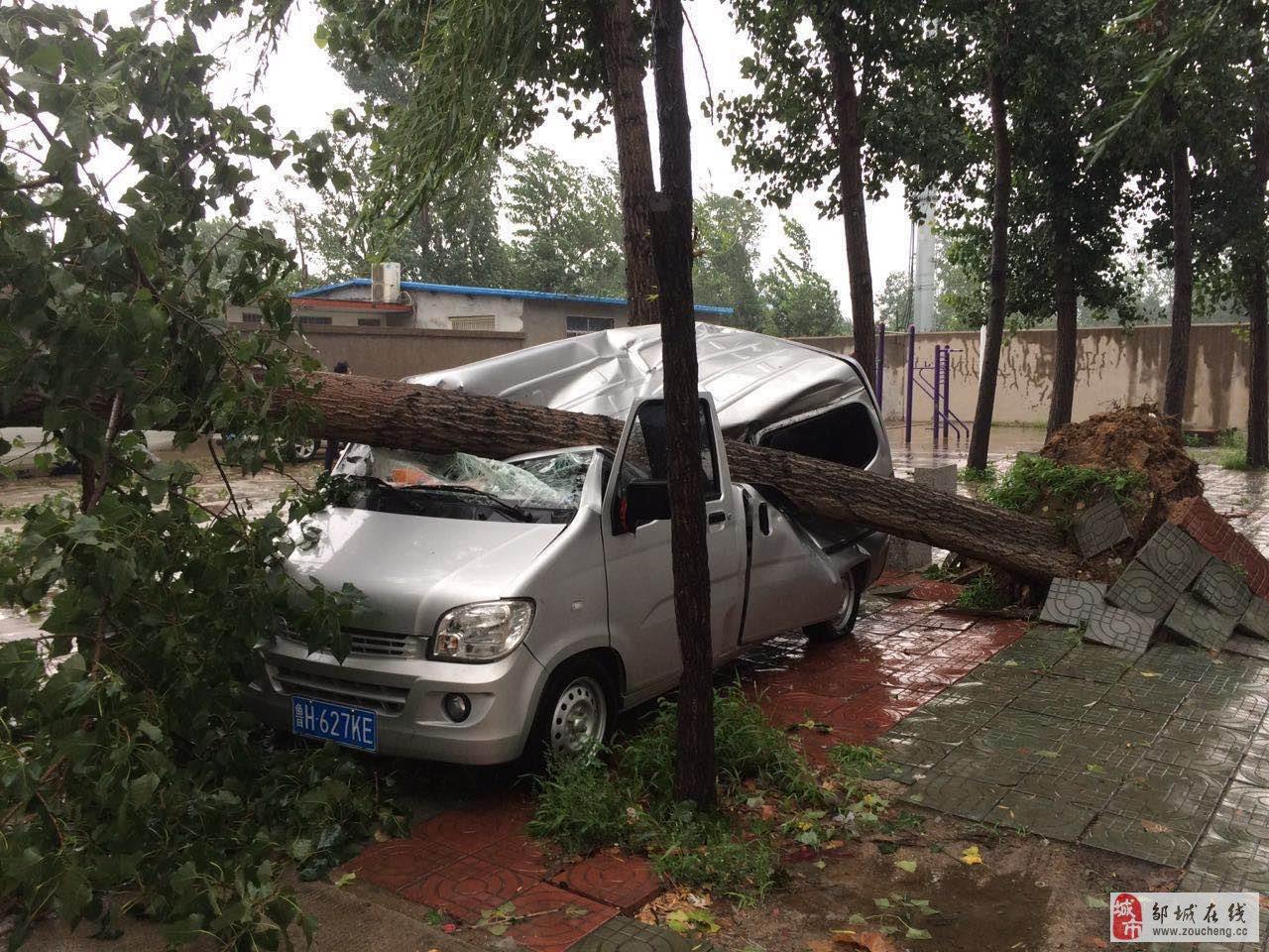 网曝某小区又一大树刮倒在一辆面包车上