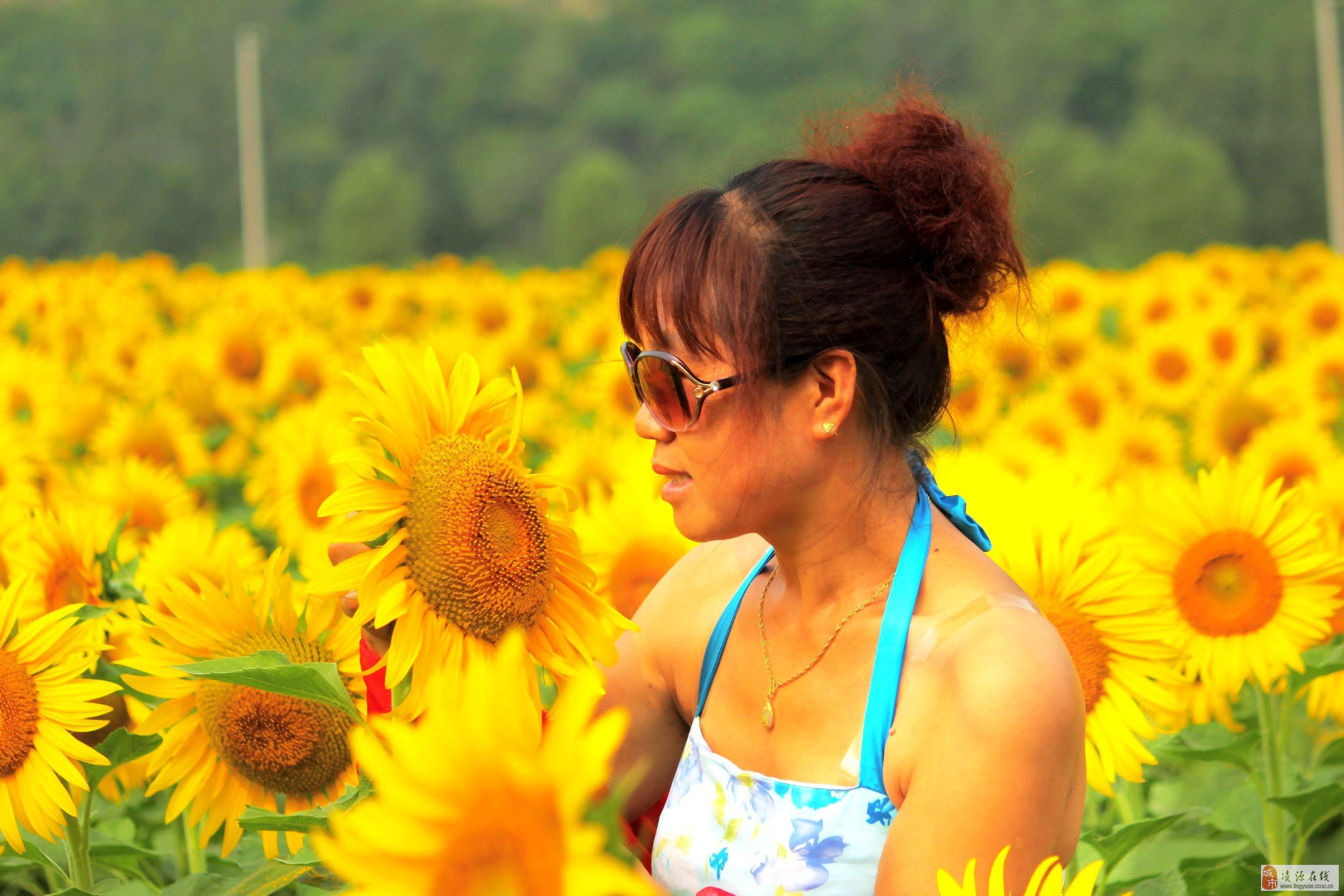 森淼百亩向阳花开,美女帅哥纷至沓来