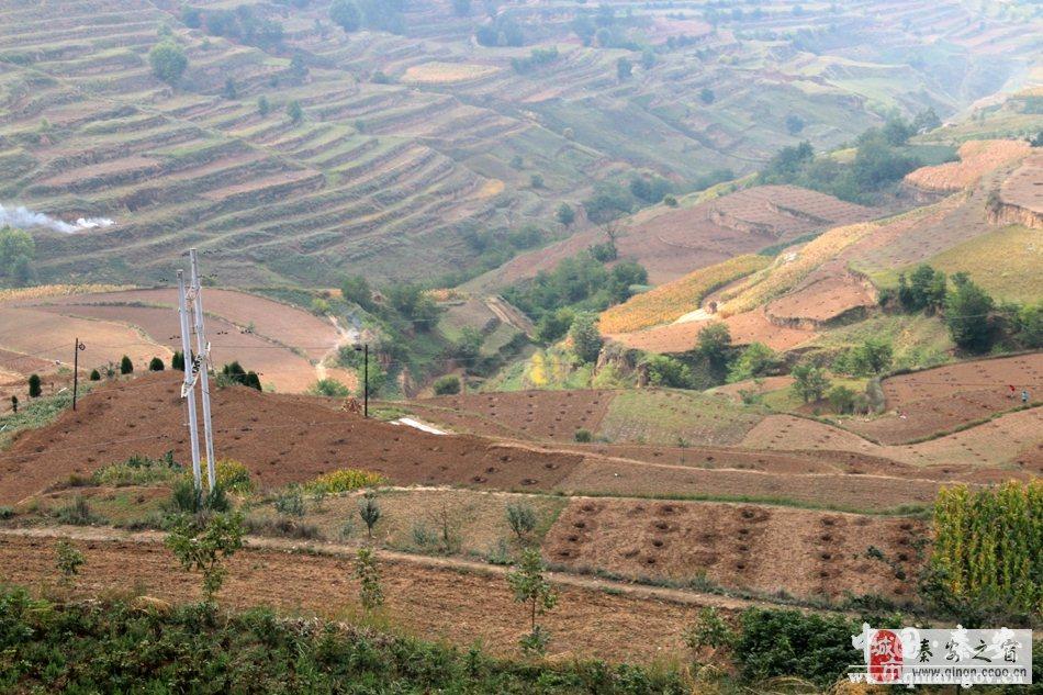 秦安县中山乡秋季果椒建园规划总面积15800亩