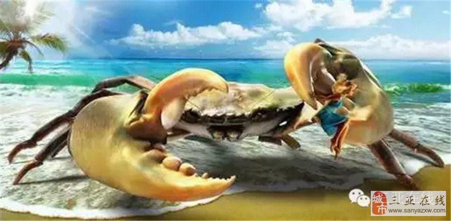 神奇 今天三亚海边悄悄游来一只深海的旺蟹 引来无数人排队