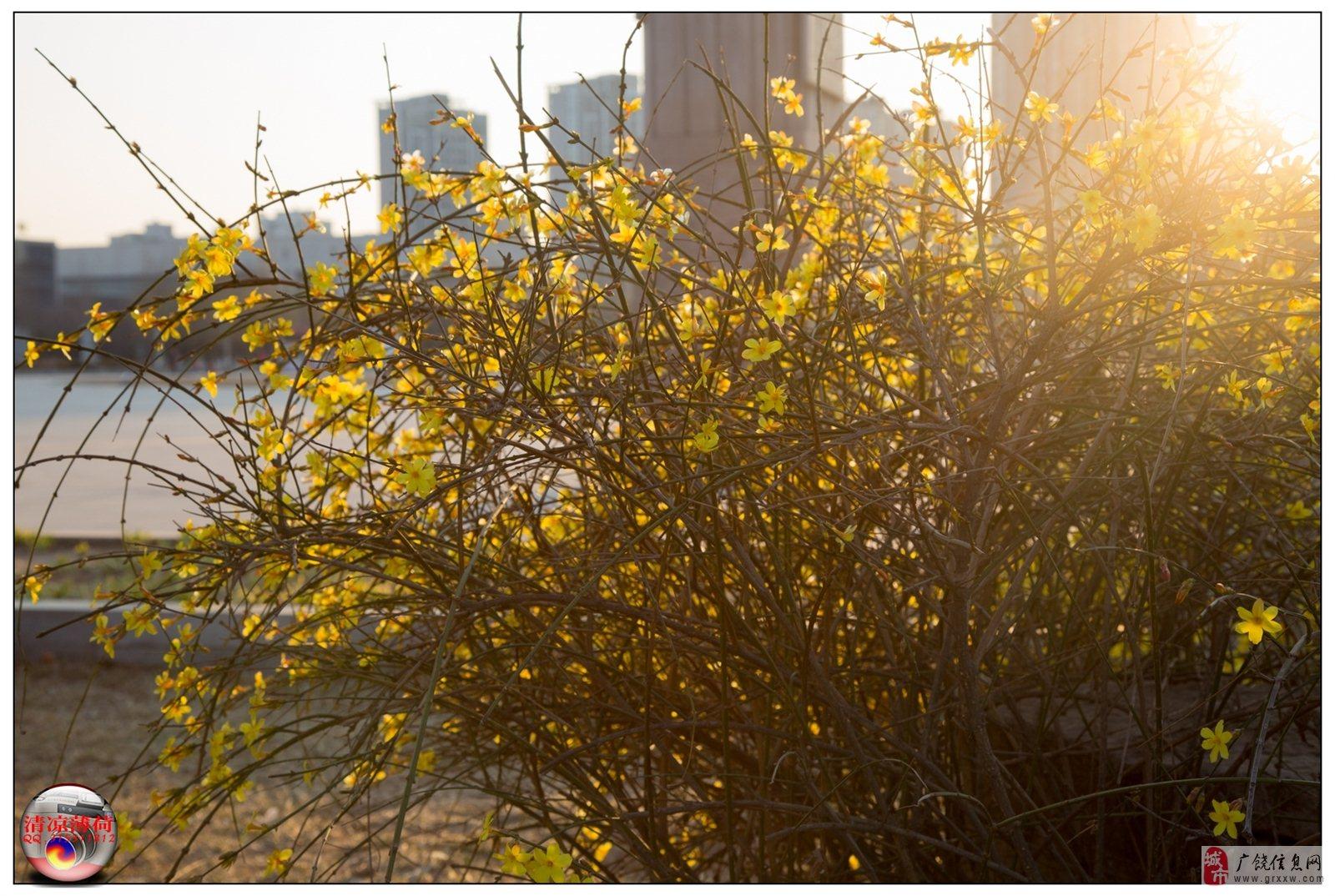 乐安公园春暖花开