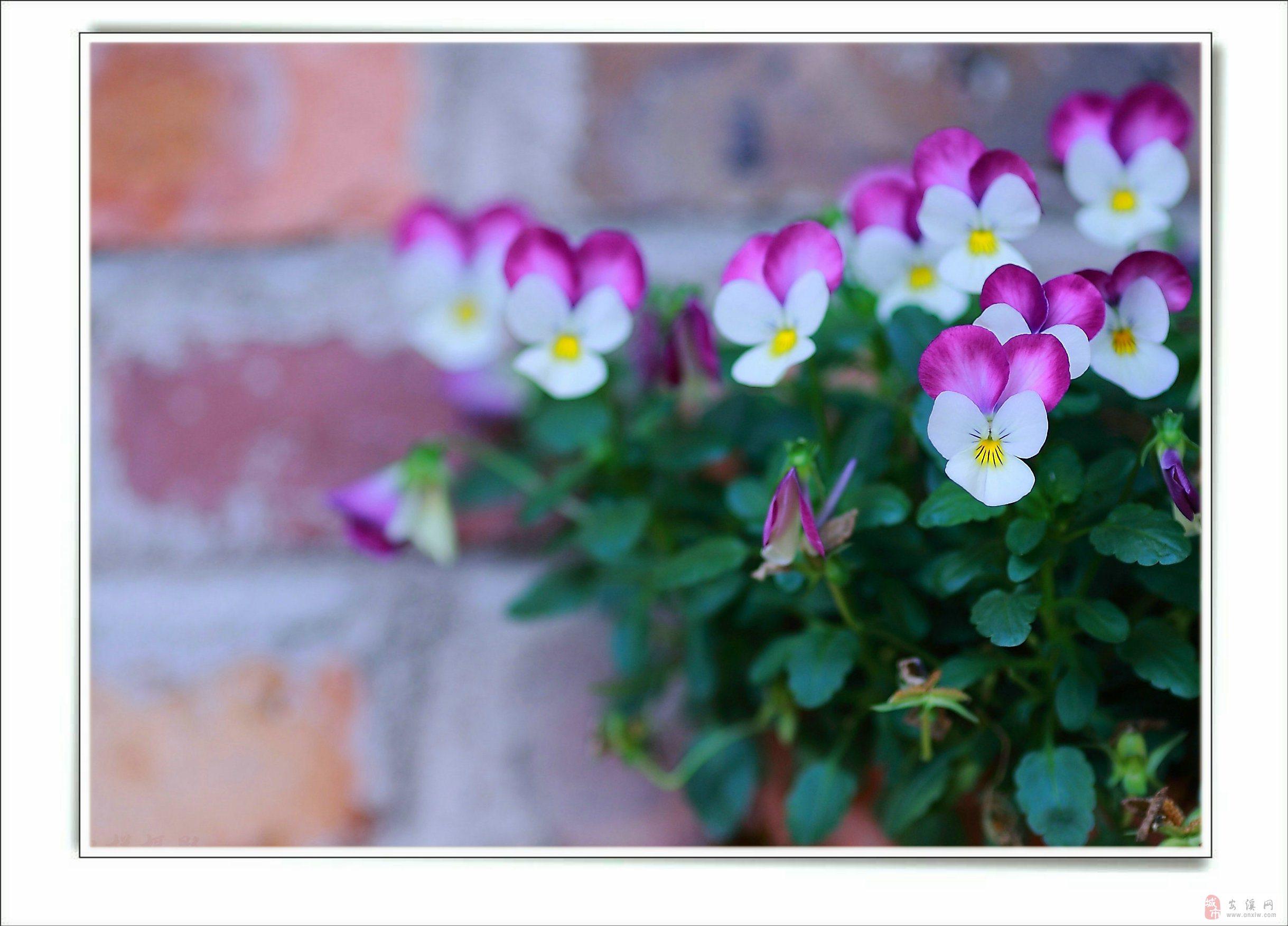 香草的花花世界