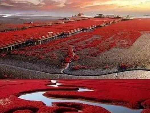 2016红海滩盘锦马拉松报名开始啦