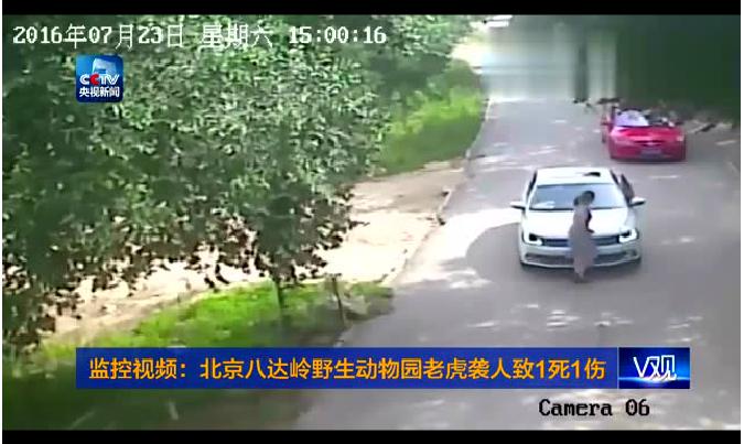 北京八达岭野生动物园老虎袭人