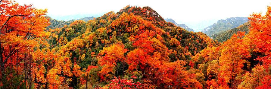 首页 汉中热点资讯 > 筑梦龙头山 ——陕西省龙头山森林公园开发建设