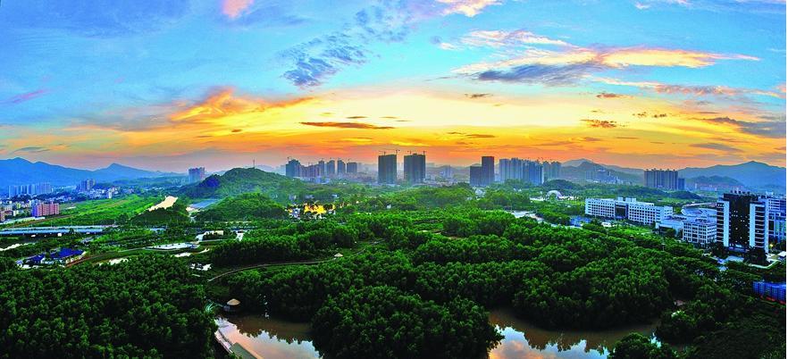 大亚湾红树林公园. 资料图片