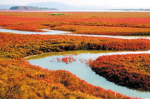 莱阳五龙河流域的湿地建设工程下月开工