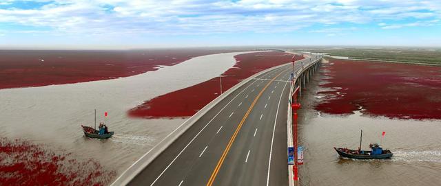 盘锦红海滩国际马拉松赛开赛在即,盘锦市民围观不