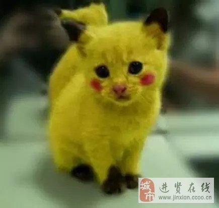 壁纸 动物 狗 狗狗 猫 猫咪 小猫 桌面 435_412