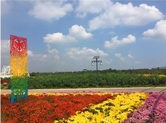 龙泉驿区:首届成都大地艺术文化旅游节在蔚然花海开幕