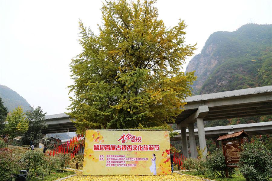 2016汉中留坝首届古银杏文化旅游节开幕