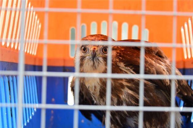 河南省野生动物救护中心在中牟林业局的