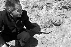 """陕西村民修路挖出数枚""""石疙瘩"""" 系恐龙蛋化石"""