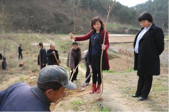 城固县工商联党支部  3月份党日主题活动——义务植树